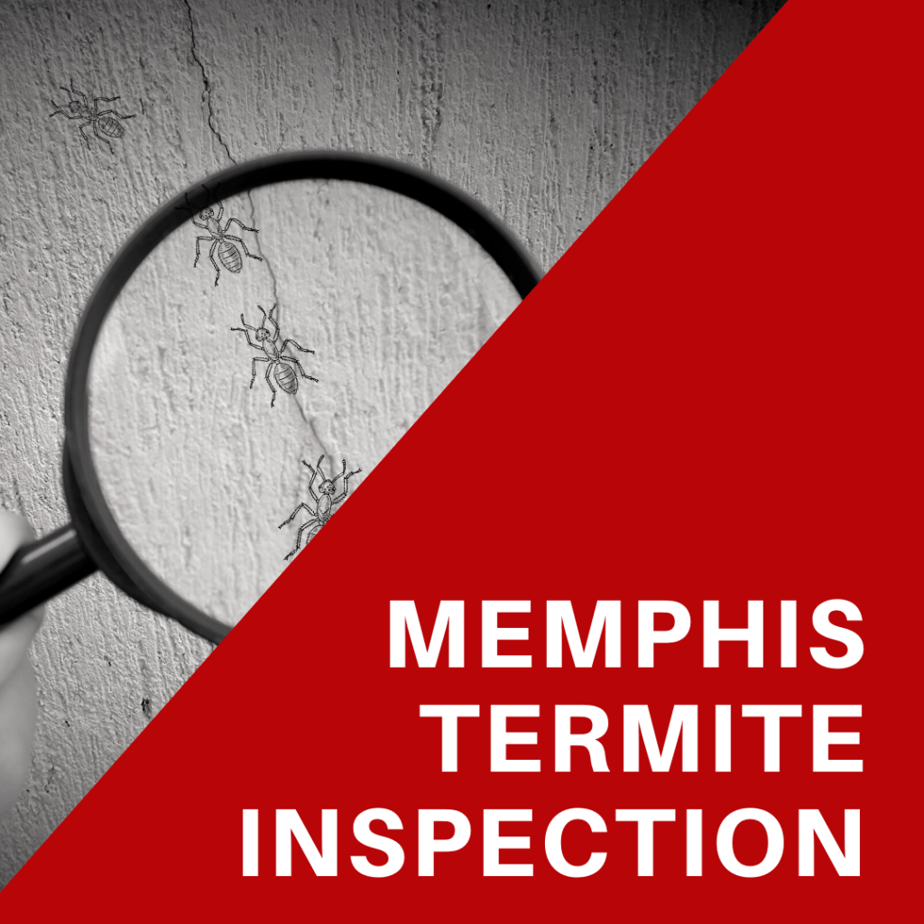 In-House Inspections Memphis Termite Inspection